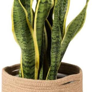 Jute Cotton Rope Plant Basket